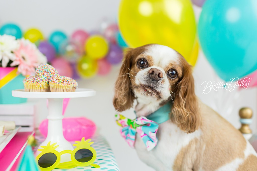 Birthday Party Inspiration  One Stylish Party  Cavalier King Charles ...